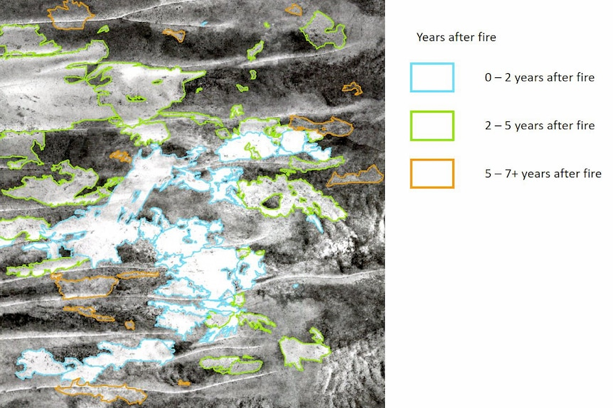 A black and white photograph with coloured lines indicating the age of fire scars.