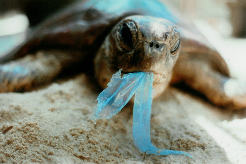 It is almost impossible to track where all plastic bags end up.