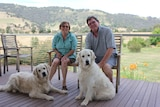 Dave Deb and Dogs enjoying the peace and quiet