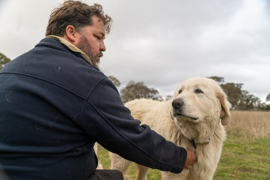 man and dog look at eachother