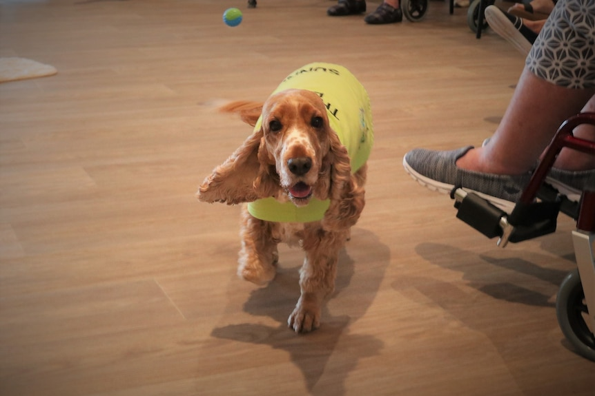 A dog wearing a yellow vest walks towards the camera.