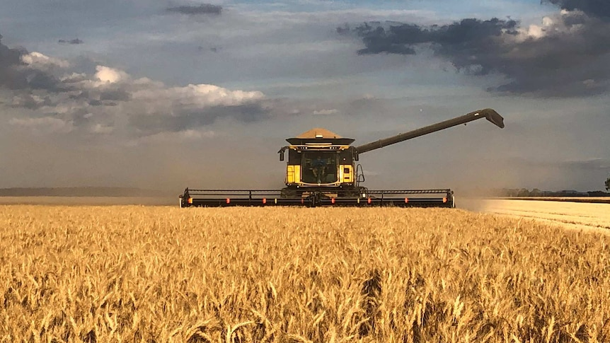 A header harvesting wheat with dark clouds in the background.