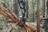 The Government has written a letter of comfort, effectively going guarantor for Forestry Tasmania's debts.