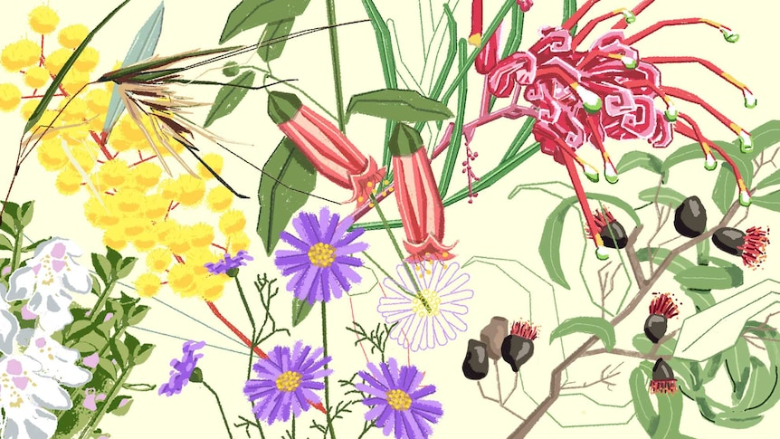 Illustration of yellow, red and purple Australian native plants for a story about how to grown natives.