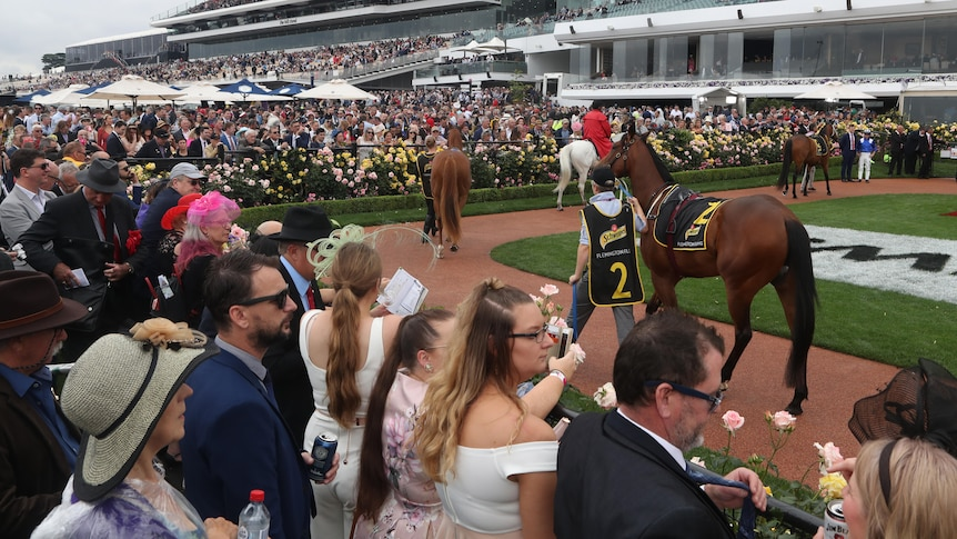 Men and women in suits and dresses look over the rail at horses in the mounting yard before a race on Melbourne Cup day.