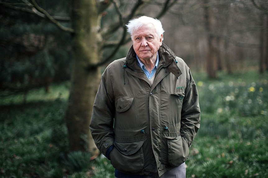 Sir David Attenborough stands in a forest looking past the camera