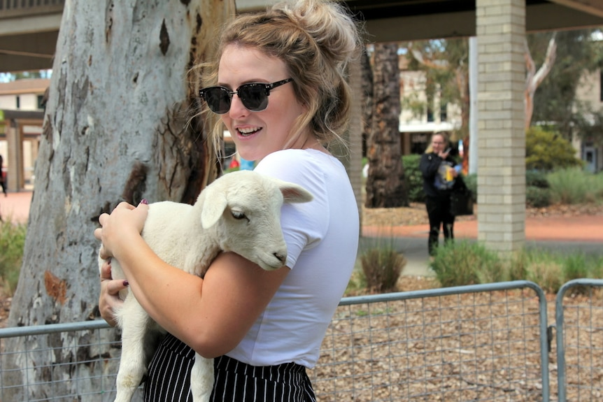 Student enjoys a cuddle with an infant lamb.