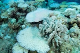 A close-up of bleached coral at Scott Reef off Western Australia's Kimberley coast.