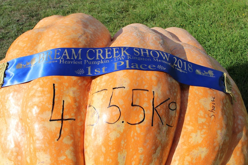 At 455.5kg, Shane Newitt's Bumblebee wins 1st Place at the Bream Creek Show, March 2018.