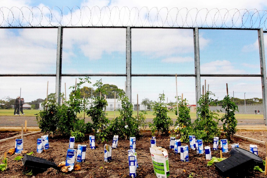 Mount Gambier Prison vegetable patch.jpg