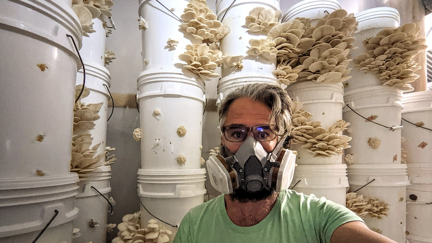 A man in a protective mask poses with buckets of mushrooms growing in his garage, in a story about growing mushrooms.