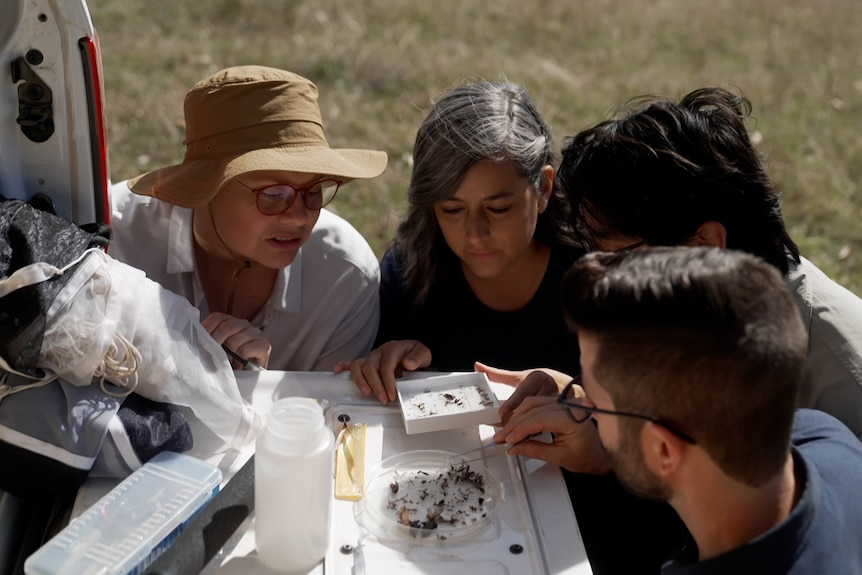 scientists looking at trays of insects