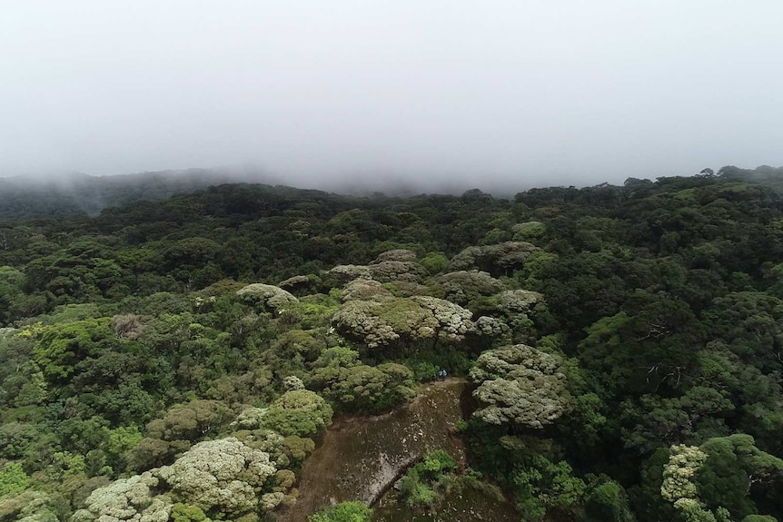 A landscape view of mist settled into lush forest