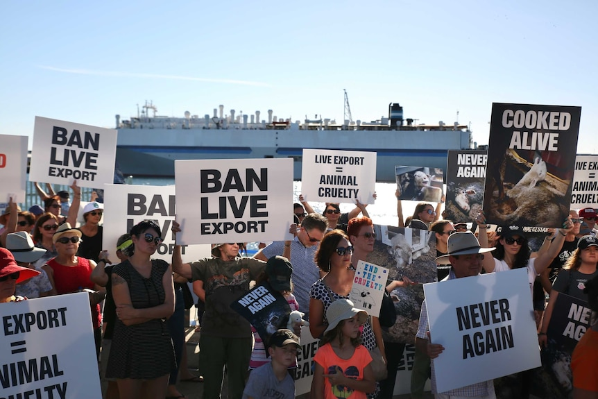 A group of protesters on the shoreline at Fremantle.
