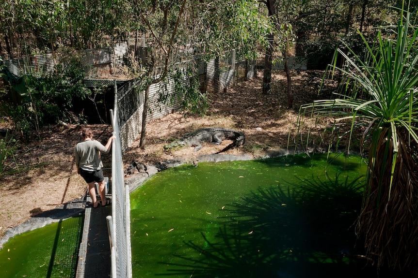 Erin Britton is seen feeding her pet crocodile from overhead.