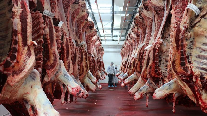 Beef carcasses hang in an abattoir
