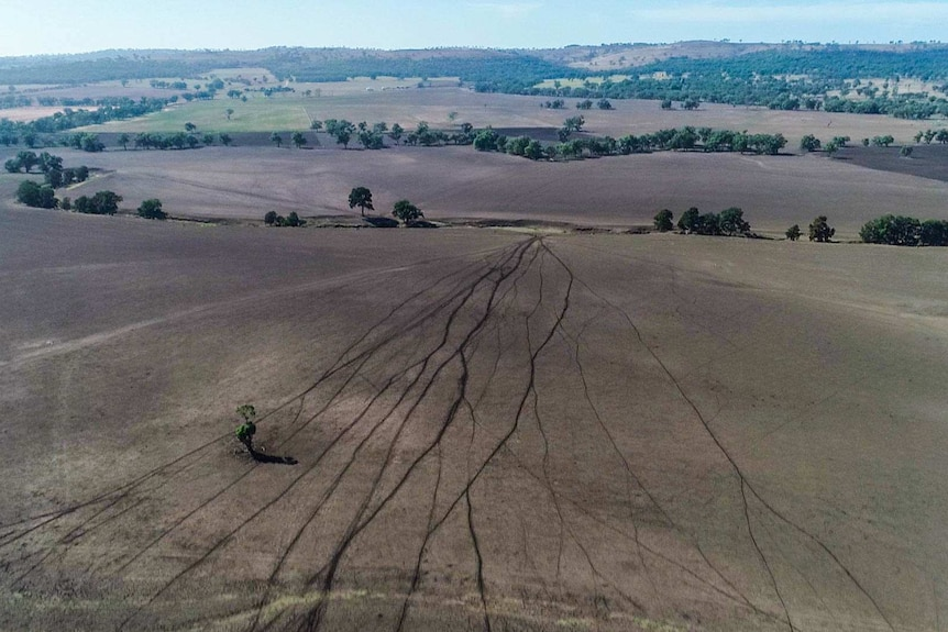 Aerial view of drought hit brown paddocks and trees hugging creek beds