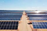 Aerial view of a solar farm.