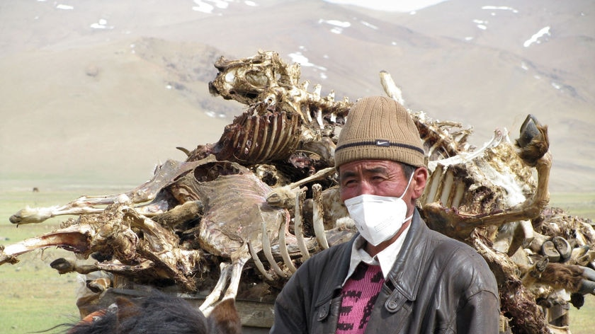 A herder stands in front of his donkey cart, piled with carcasses
