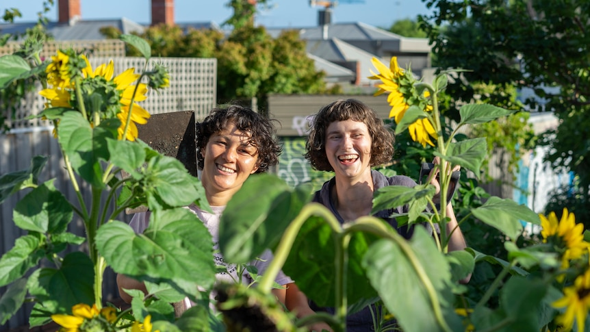 Two women in a Melbourne community garden with sunflowers and a spade, having a garden without your own space.