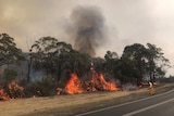Trees in flames
