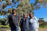 Three First Nation's people standing in front of large gum tree, woman on left two with two men.