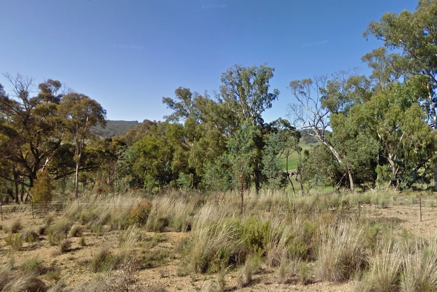 Bushland at Sallys Flat in New South Wales