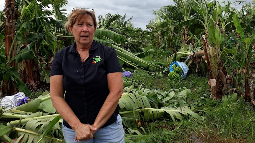 Woman stands in a field with destroyed banana plants