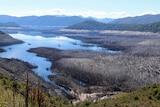 Lake Gordon at low levels exposing trees