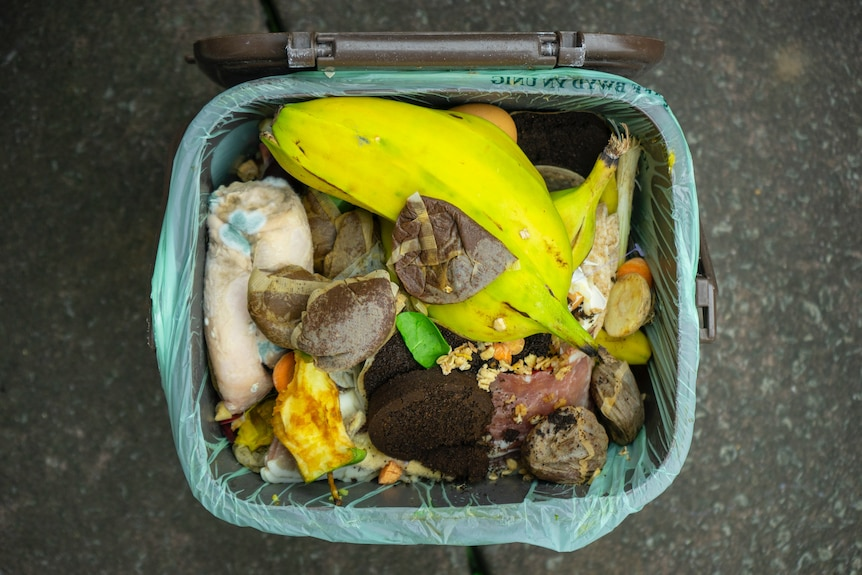 Food scraps for compost