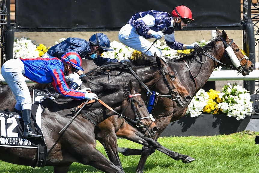 A tight finish as three horses go over the line at the Melbourne Cup.