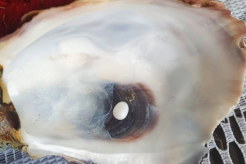 A tiny pearl sitting in an oyster shell