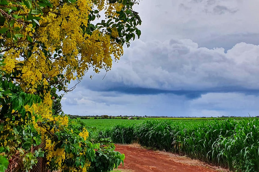 Heavy rain clouds roll over the horizon towards Gillian Colasimone's garden at Qunaba near Bargara.