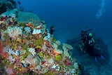 Scientist from James Cook University exploring submerged reef