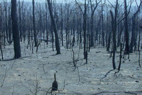 Burnt WA forest