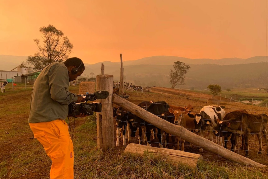 Doody filming cows amid on farm under smoky orange sky.