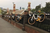 Seven yellow bicycles hang from a fence beside a footpath.