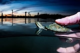 A hand holds a baby freshwater turtle on the water surface with a sweeping sky in the background.