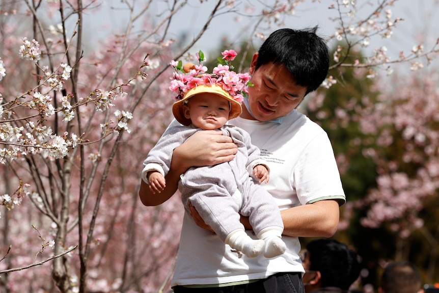 A man holds a baby in a grove of blossoming trees.