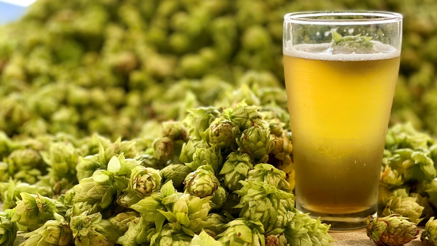 a beer and a pile of hop buds