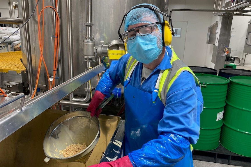 A factory worker in uniform and protective gear holding up some product in a sieve.