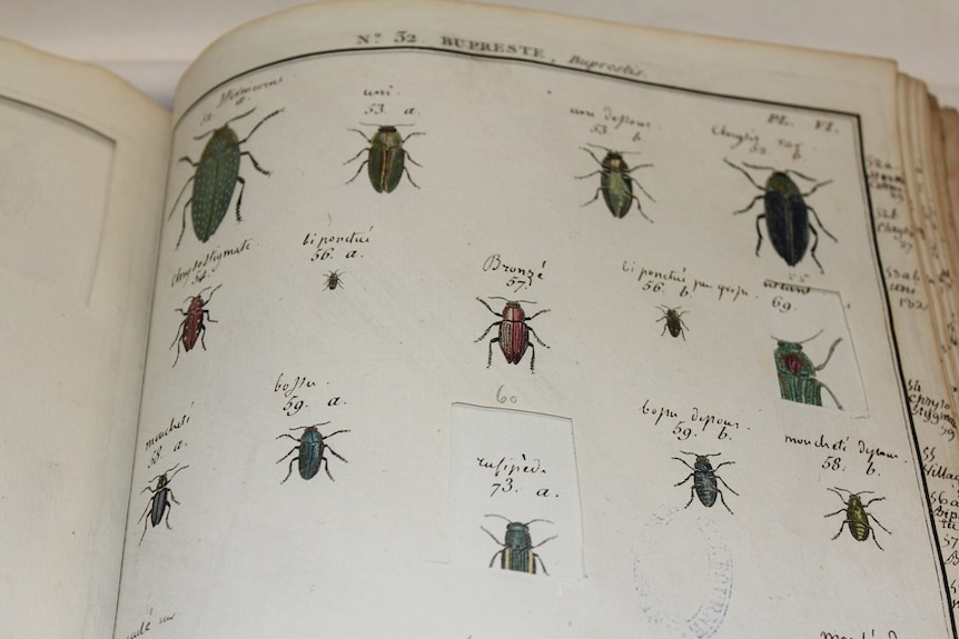 A page of The Natural History of Insects from about 1780 showing where a picture of a beetle has been cut out.