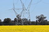 TransGrid power lines run through a Culcairn farm in New South Wales.