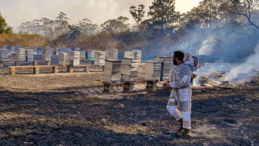 A beekeeper and burning hives