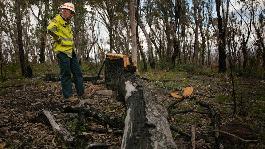 a man stares down at a charred tree