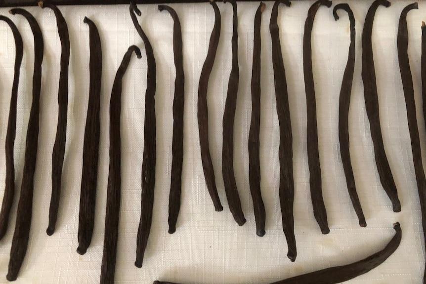 Dark, dried vanilla beans on a piece of white cloth.