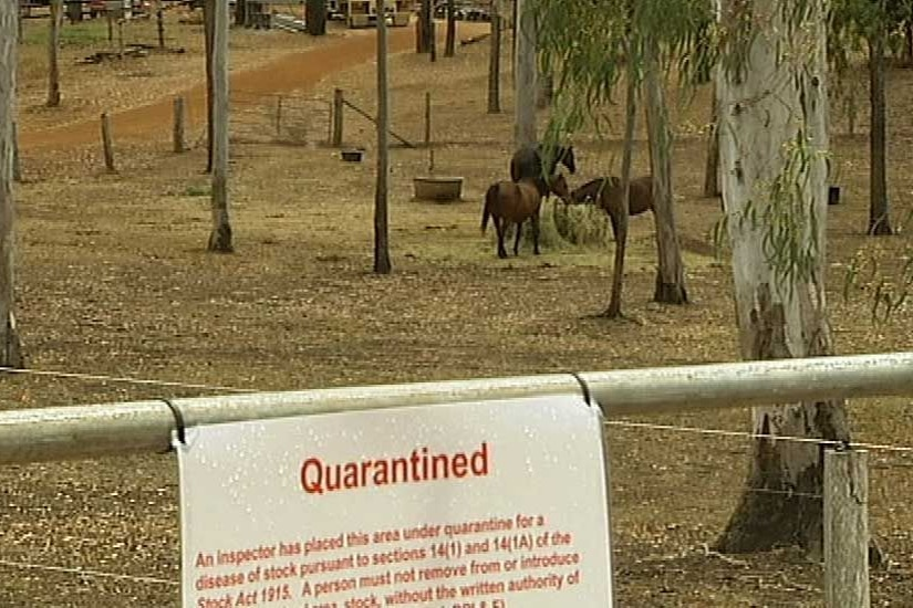 Hendra virus kills 85 per cent of horse it infects and horse owners are urged to vaccinate
