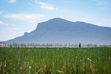 A man stands in a wetland with a mountain in the background.