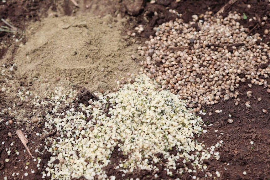 Three different ways hemp seeds can look if they're hulled, whole or powder.