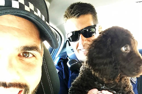 Stolen dog with two SA Police officers in patrol car.